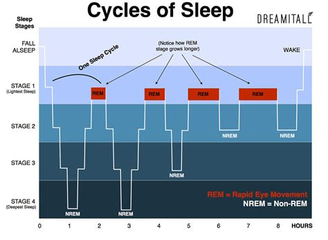 rem sleep cycle picture 10