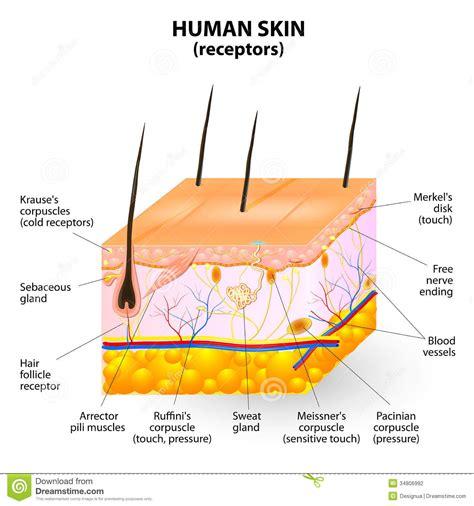 skin cancer invades a nerve picture 2