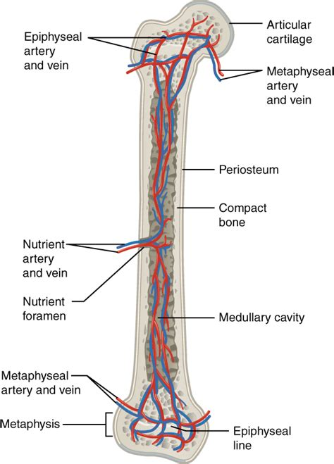 Blood flow of bony picture 10