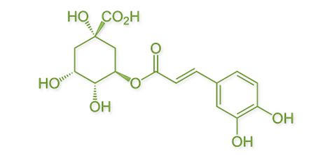 chlorogenic picture 21