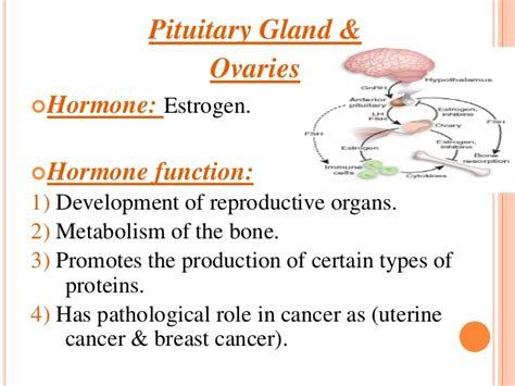 side effects of ovary glandular picture 6