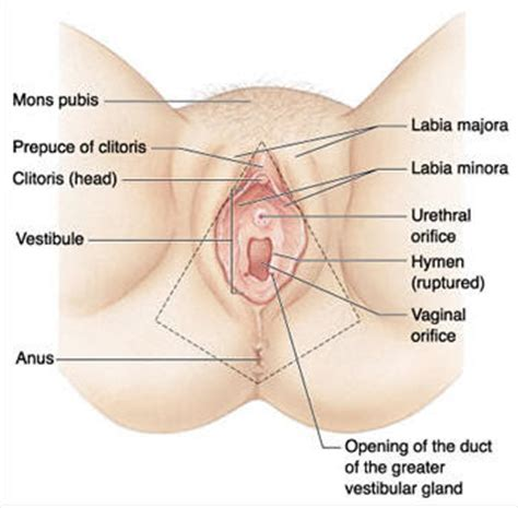 vaginal lips picture 10