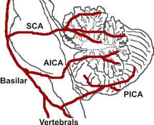 cerebral blood flow motor cortex picture 19
