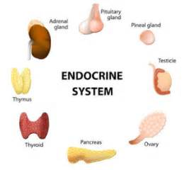 endocrine gland picture 5