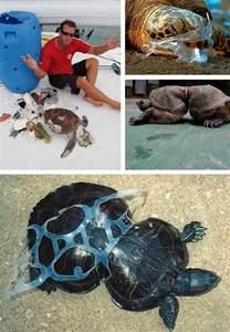 marine debris awareness picture 6