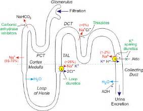 herbal diuretics for hypertension picture 1