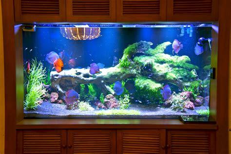 aquarium h picture 9