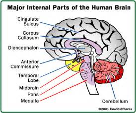 major components of the psychological aspect aging picture 7