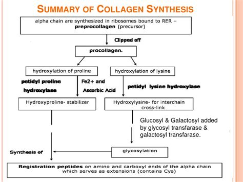 collagen synthesis picture 3