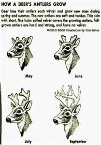 will deer antler increase size of s picture 9
