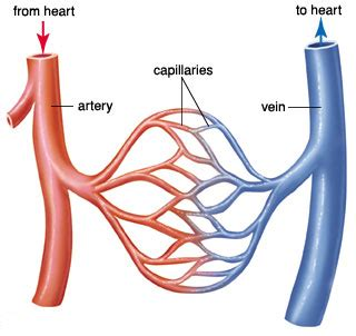 Vessel circulation picture 2