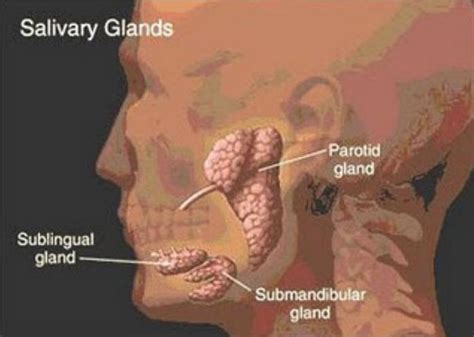 how to treat inflamed thyroid picture 7