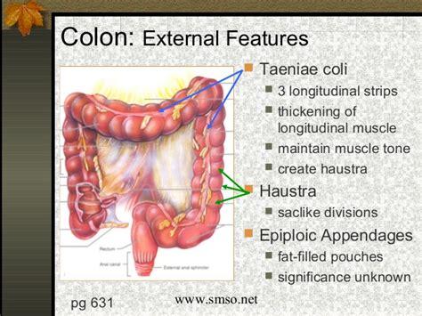 colon location picture 6