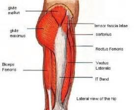 leg muscle diagram picture 7