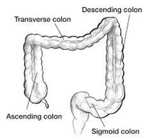 diagram descending colon picture 7