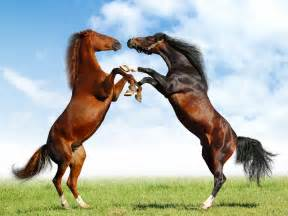 gambar penis kuda picture 3