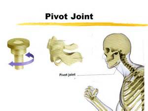 pivot joint picture 2