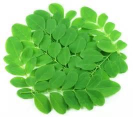 herbs name in.urdu picture 17