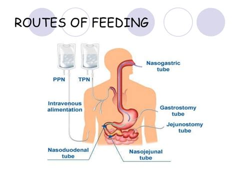 formula for digestion picture 7
