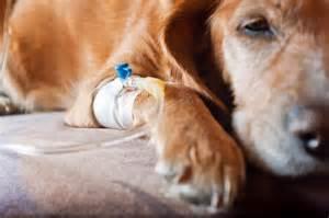dog symptoms of gastrointestinal bleeding picture 13