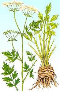 herbal plus picture 10