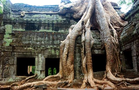cambogia en panama picture 10