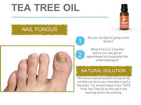 tea tree oil for nail fungus picture 2