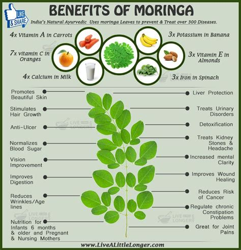 can moringa herbs cure h picture 9