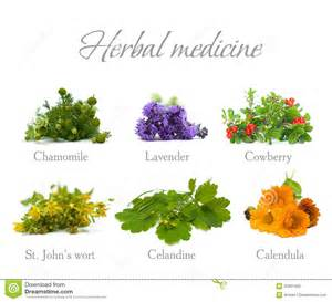 chinese herbal remedies picture 10