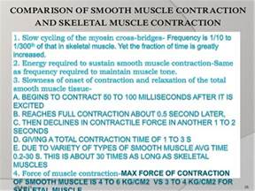 contraction and stimulation of the uterine smooth muscle picture 15