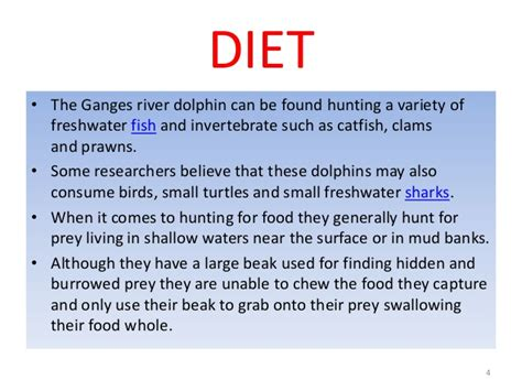 a dolphin's diet picture 18
