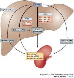 drugs that are metabolized by the liver picture 15