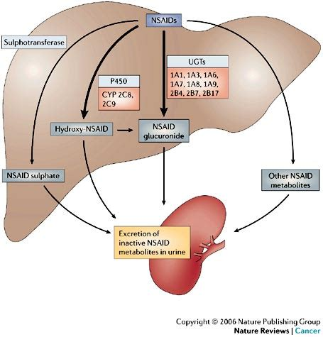 aspirin effect on liver enzymes picture 5