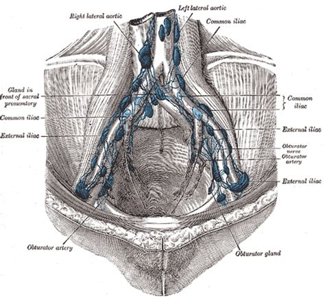 gall bladder disorders picture 18