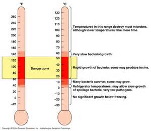 bacterial growth chart picture 6