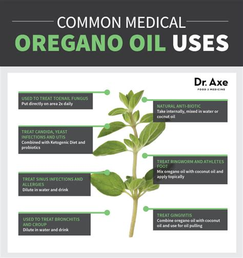 can taking oil of oregano help with epididymitis picture 1