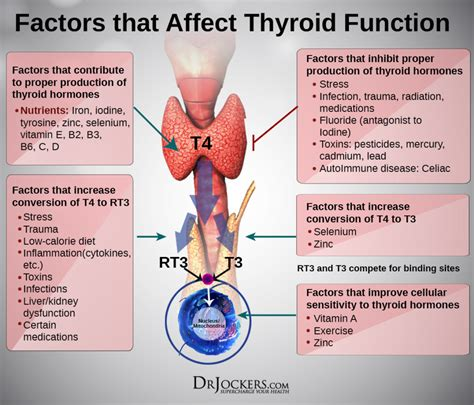 how does taking a thyroid pill affect tsh levels picture 2