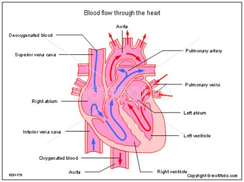 blood flow path picture 5