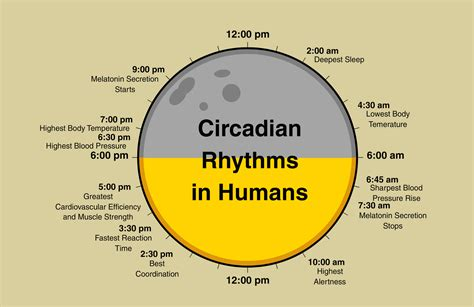 circadian sleep rhythm picture 2
