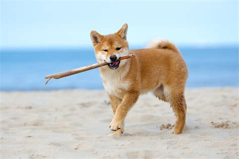 raw diet dog picture 11