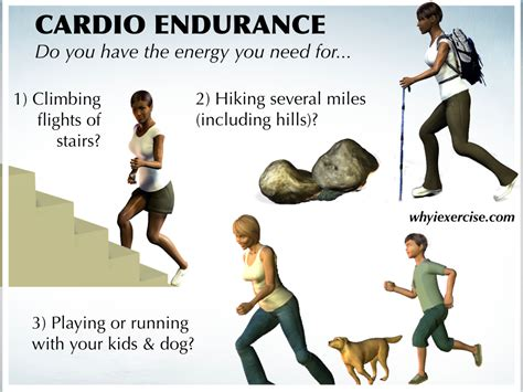 Definition of muscle endurance picture 18