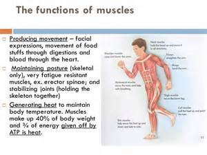 function of the cilary muscle picture 19