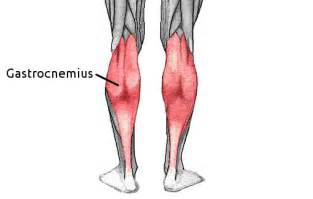 gastronemius muscle picture 3