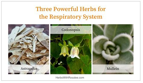 what herb cure fuild in lung picture 10