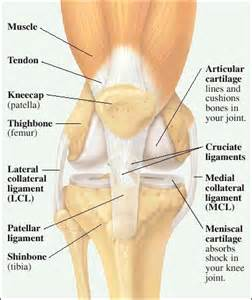 pain just right of knee cap picture 3