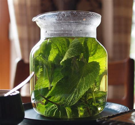 lemon balm for high blood pressure picture 9