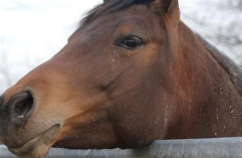 equine herpes virus blisters picture 7