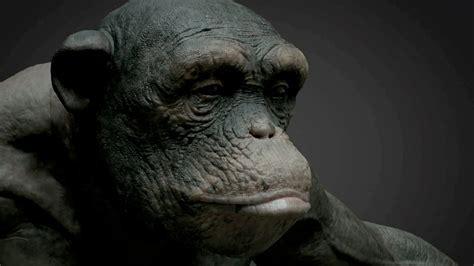 skin color in chimpanzees picture 5