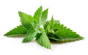 peppermint leaf picture 9