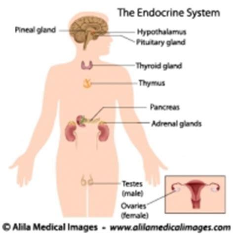 adrenal gland picture 14